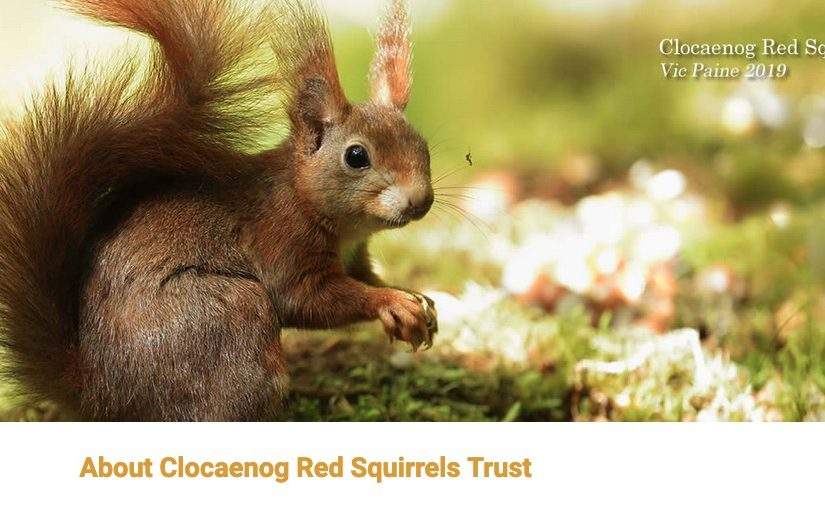 Clocaenog Red Squirrels Trust